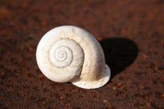 Escargot blanc sur la plaque de métal rouillée Image libre de droits