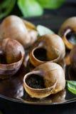 escargot Bourgognesniglar med vitlöksmör royaltyfri foto