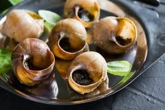 escargot Bourgognesniglar med vitlöksmör arkivfoto