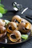 escargot Bourgognesniglar med vitlöksmör fotografering för bildbyråer