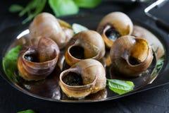 escargot Bourgognesniglar med vitlöksmör arkivfoton