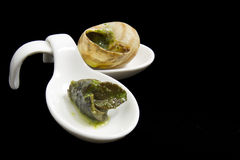 Escargot in Butter and Parsley Stock Photo