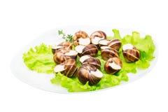 Escargot Stock Photos