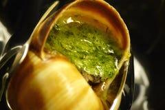Escargot closeup. Closeup of a delicious prepared escargot (Helix pomatia) with appetizing sauce Royalty Free Stock Photo
