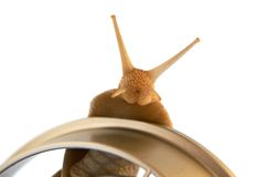 Escargot comestible Images libres de droits