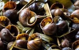 Escargot cuit photo libre de droits