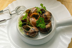 Escargot, cultura francesa fotografia de stock
