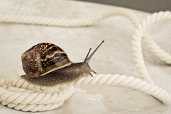 Escargot curieux Photo libre de droits