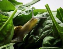 Escargot curieux Image stock