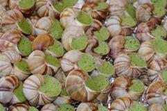 Escargot d'escargots photos libres de droits
