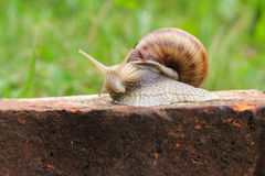Escargot dans l'herbe Photographie stock
