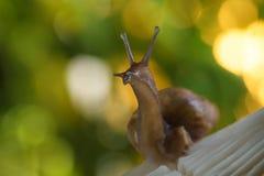 Escargot dans la forêt Photo libre de droits