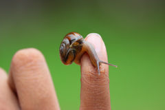 Escargot dans la main d'enfant, amant de nature Image libre de droits