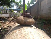 Escargot dans la meule avec l'éclat du soleil photo stock