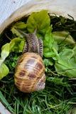 escargot dans la tasse en plastique Images libres de droits