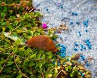 Escargot dans le jardin Photo libre de droits