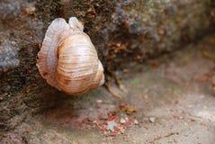 Escargot dans le jardin Photos stock