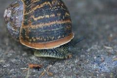 Escargot dans le macro Photos stock
