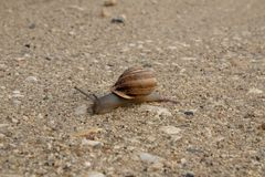 Escargot dans le sable photos stock