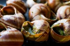 Escargot de Bourgogne - alimento do caracol com manteiga de ervas, prato do gourmet de França imagem de stock