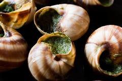 Escargot de Bourgogne - alimento do caracol com manteiga de ervas, prato do gourmet de França foto de stock royalty free