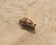 Escargot de cône à la plage photographie stock libre de droits
