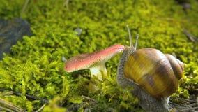 Escargot de champignon trouvé clips vidéos