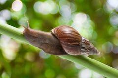 Escargot de jardin Photos libres de droits