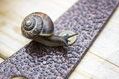 Escargot de jardin Photographie stock libre de droits