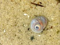 Escargot de lune Photographie stock libre de droits