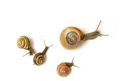 Escargot de mère et son peu ceux Image stock