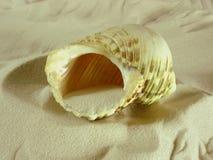 Escargot de mer Photographie stock