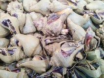 Escargot de mer de conque Image libre de droits