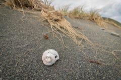 Escargot de mer Shell On Black Sand Beach images libres de droits
