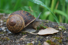 Escargot de nature Photographie stock