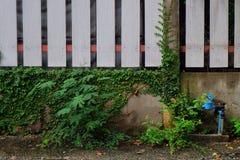 Escargot de nature de ciment de mur Photographie stock libre de droits