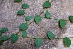 Escargot de nature de ciment de mur Photos stock