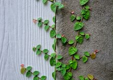 Escargot de nature de ciment de mur Images stock