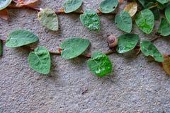 Escargot de nature de ciment de mur Images libres de droits
