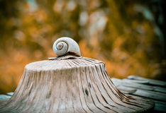 Escargot de Shell photo stock