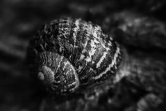 Escargot de sommeil Photos libres de droits