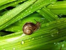Escargot de terre Image libre de droits