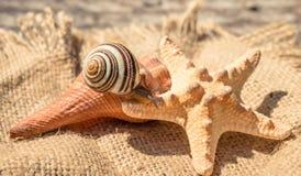 Escargot de terre mignon L'été est les souvenirs marins Photos libres de droits