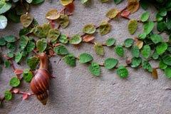Escargot de vert de feuille de Wallleaves Photo libre de droits