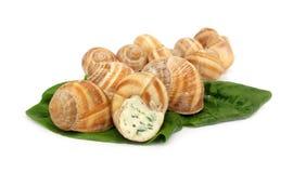 Escargot del caracol preparado como alimento Imagen de archivo libre de regalías