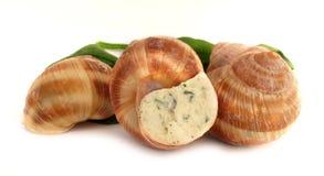 Escargot del caracol preparado como alimento Fotografía de archivo