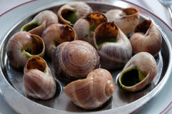 Escargot dish on the plate, traditional french delicatessen, hea Royalty Free Stock Photo