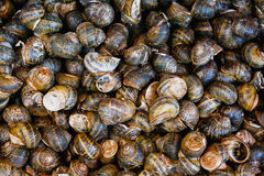 Escargot display Royalty Free Stock Photo