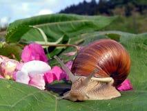 Escargot et fleurs Image libre de droits