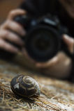 Escargot et photographe photo libre de droits